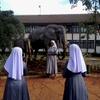 Nuns pose for a photo outside of an animal park in Nairobi, Kenya. November 2013.