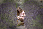 Ruby Stott of Portland, 10, collects lavender at the Helvetia Lavender Festival in Hillsboro.