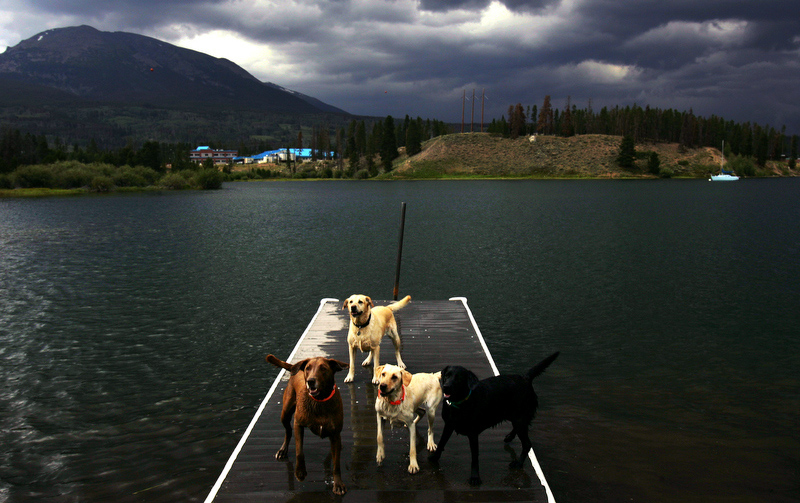 Dogs on pier at Dillon Reservoir, Colorado