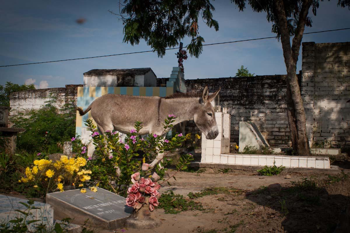 Aipe, Huila, 2008.