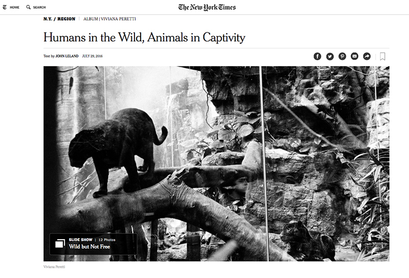 My project about Wildlife in New York featured in The New York Times: http://www.nytimes.com/2016/07/31/nyregion/humans-in-the-wild-animals-in-captivity.html