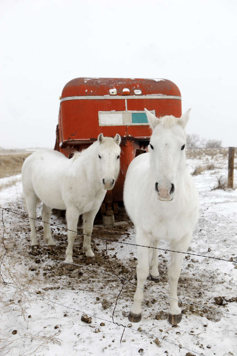 A pair of horses shelter behind a trailer to get out of the wind on the approach to Angostura Reservoir.