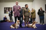 Basset hounds Foxy Brown and Cecil B Demile wait for their turn in the competition at the 137th Westminster Kennel Club Dog Show in Manhattan. (Feb. 11, 2013)Photo by Nancy Borowick