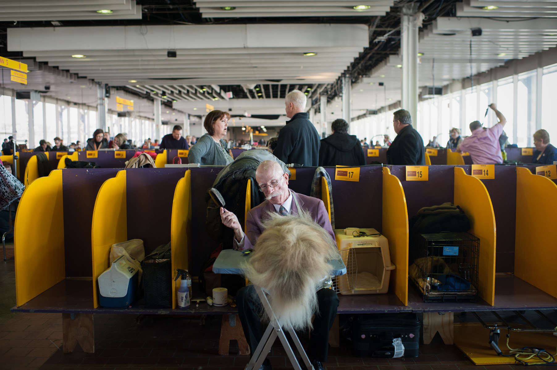Tom Curly combs the locks on his 17th month old Pekingese named Doc before he competes at the 138th Westminster Kennel Club Dog Show February 10, 2014 in Manhattan.By Nancy Borowick