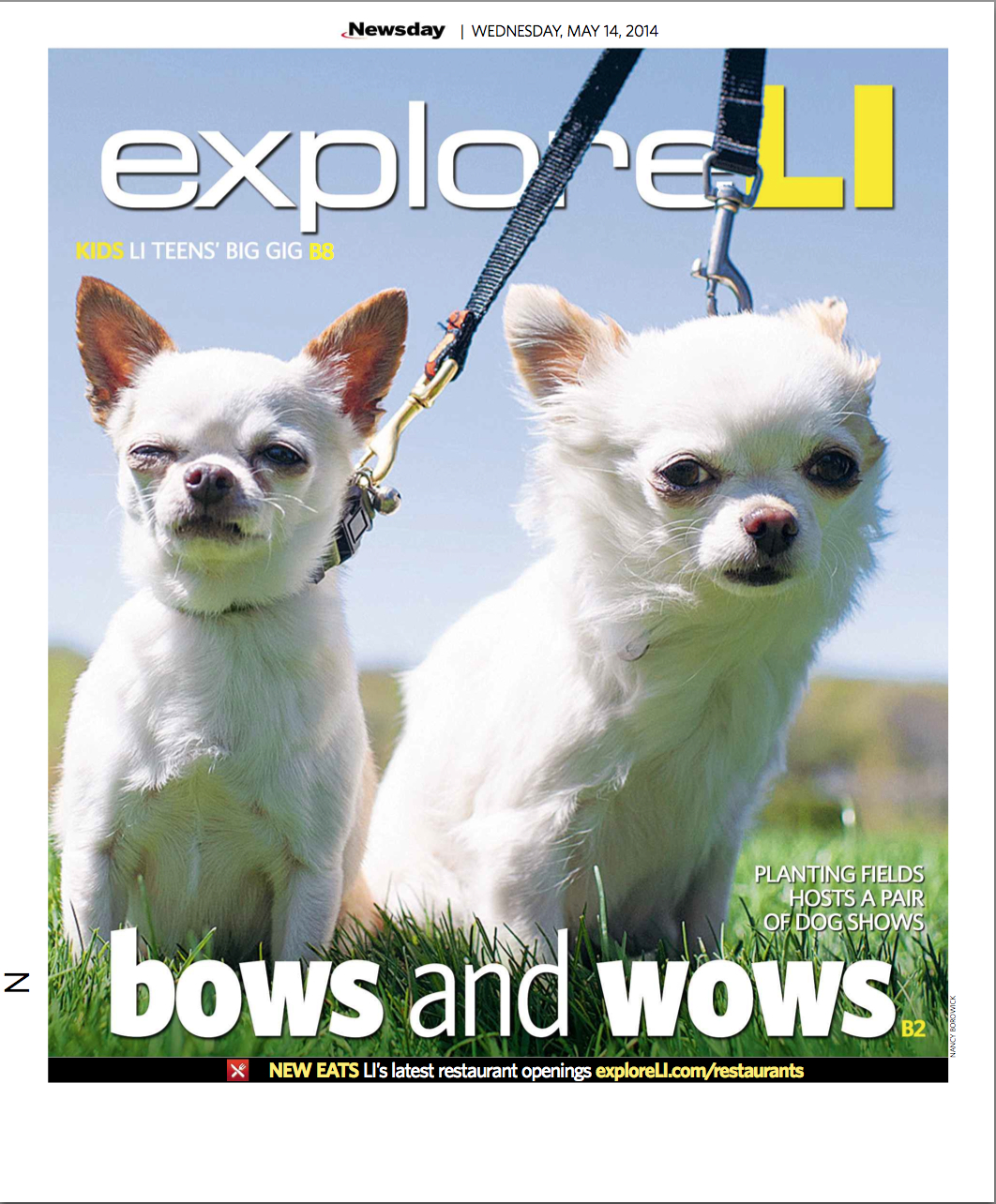 newsday_dogs_chihuahua