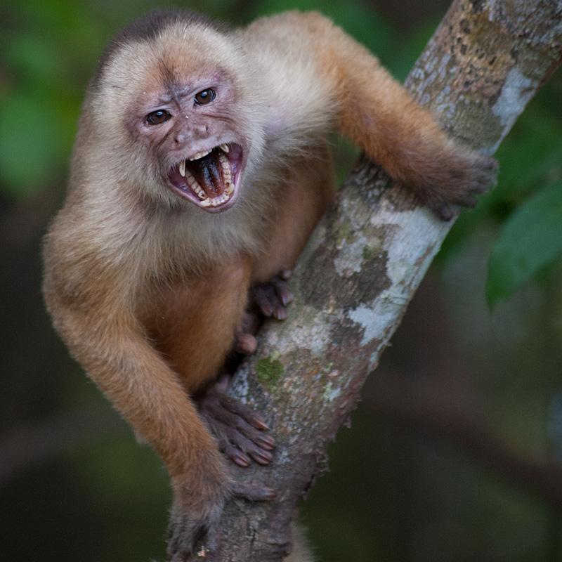 Tropical Manaus - AM