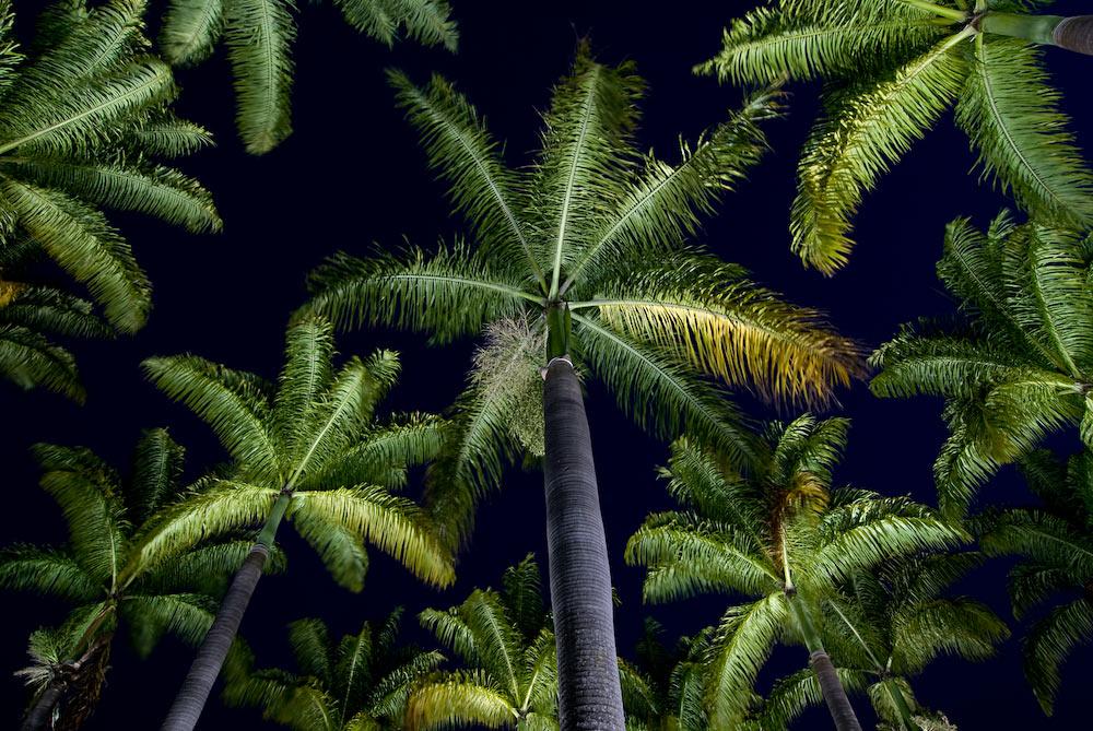 Jardim de palmeiras imperiais - DF