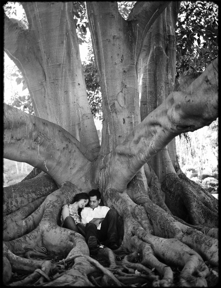 los_angeles_engagement_session_huge_tree