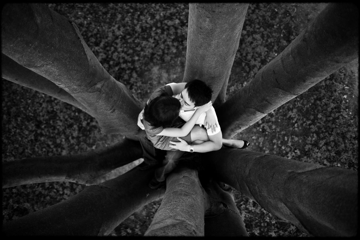 Photo of couple sitting in a beautiful tree kissing. Shot from above.