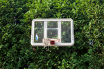 Martino's basketball net, Shelton, CT.