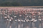 Lake Nakuru - Central Kenya