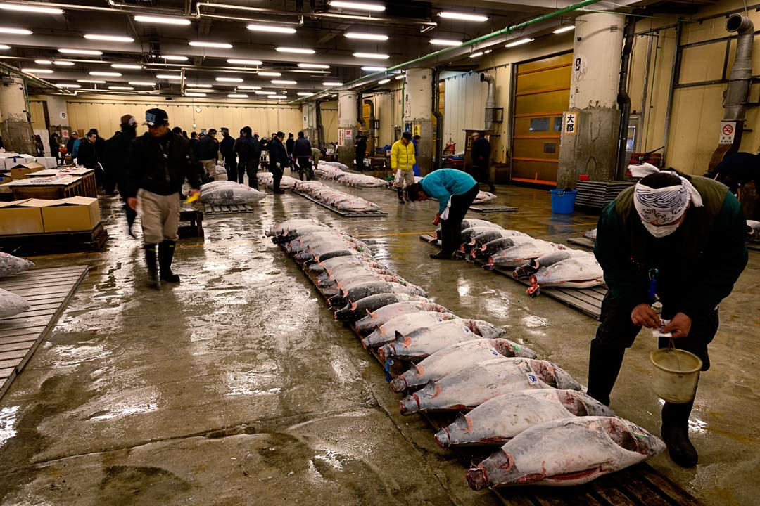 Tsukiji Fish Market is the biggest wholesale fish and seafood market in the world. Its also one of the largest wholesale food markets of any kind. Tsukiji is located in central Tokyo, and is a major attraction for foreign visitors. Tokyo - Japan