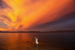 bride and groom embrace on lake during sunset.