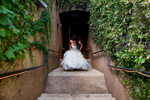 alice-johnny-011-viansa-winery-sonoma-wedding-photographers-theilen-photography