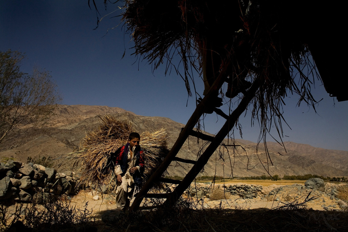 Young boys carry loads of rice shoots on their back as they collect a harvest with their family in the district of Khanjan in Baglan province, Afghanistan on Thursday October 11, 2007. Farmers in Afghanistan mostly sell their goods to the local markets. Rice is a staple food in Afghan life and a safe crop for farmers who are under pressure not to grow the more profitable crops of poppy or Cannabis.