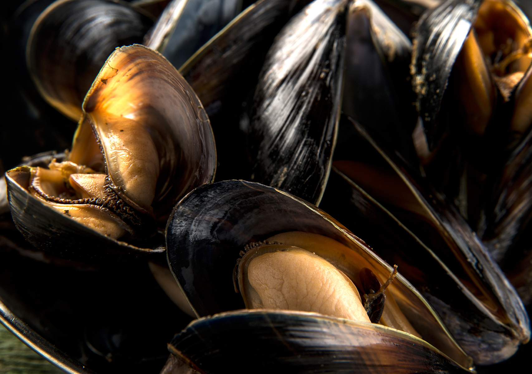 Mussels-Carl Kravats Food Photography