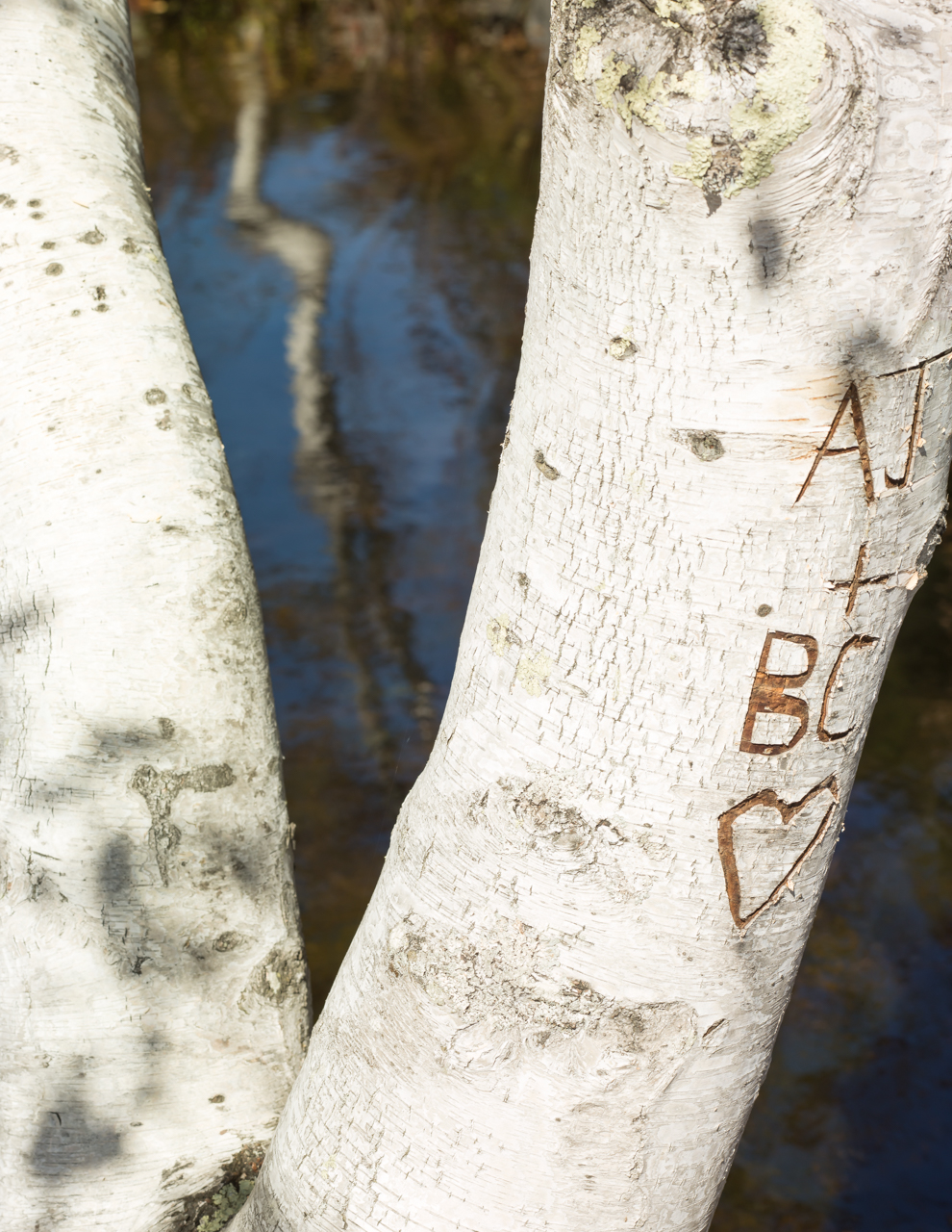 Birch_Abstract-032310