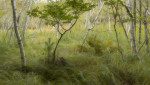 Birch_Berries_Brush-