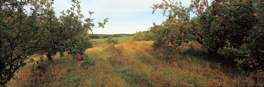 Collegeville Orchard
