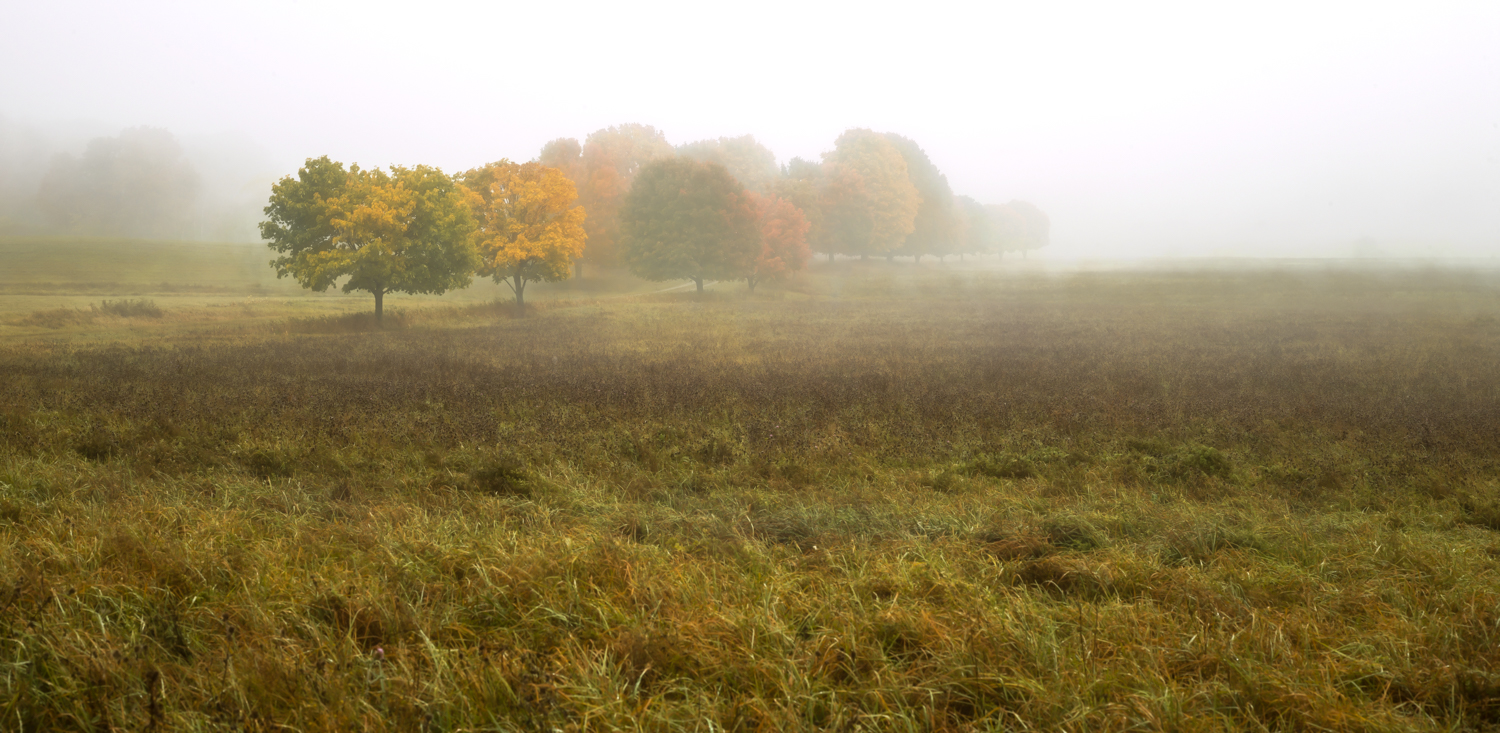 Fog_on_Farm-