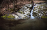 Forest_Falls_2-