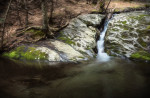 Forest_Falls_4-