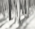 Forest_from_the_Trees_edit-