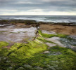 LaJolla_Green_edit_edit-