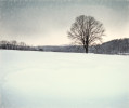 Richmond_Winter-