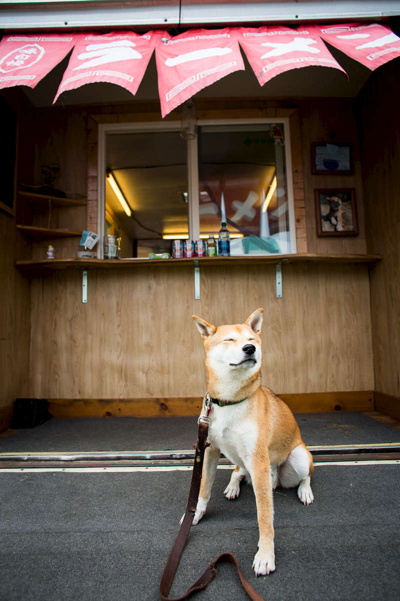 Miso the dog sits in front of the ordering window of the Miso Hungry food cart during the Wings Over Vermont air show on the Burlington waterfront on Friday, August 12, 2013.