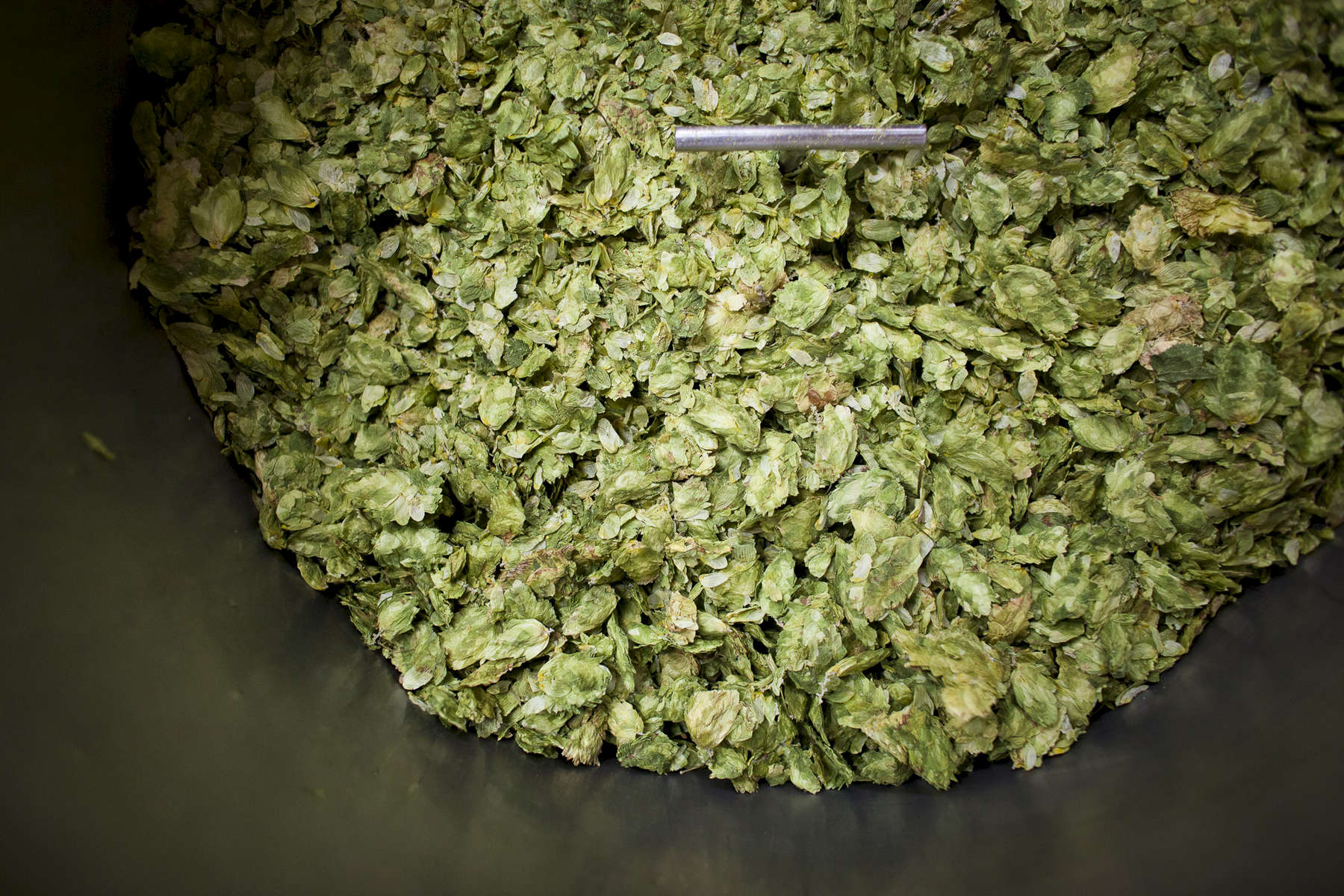 Detail of dried hops at Sean Lawson's home-based microbrewery, Lawson's Finest Liquids, in Warren, Vemont. photo by Monica Donovan for the Boston Globe