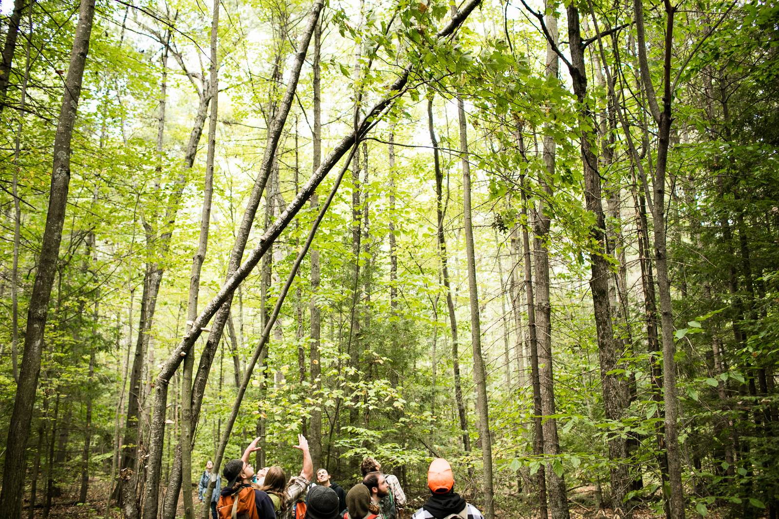 Community College of Vermont students explore the woods during a class in Winooski, Vermont. by photographers at Reciprocity Studio for the Vermont Student Assistance Corporation (VSAC)