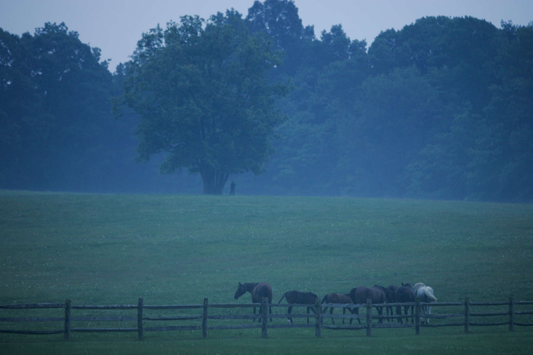 Digital: GWB 19:35 Photo Opportunity, Remarks to and dinner for Victory 2004. Pastoral scene of horses, CAT team member on the hill.u Kirtland Hills, Ohio.