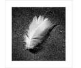 111111111111111feather-